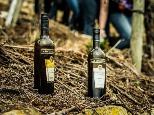 Escursione guidata del vino con degustazione di vini vicino a Stoccarda
