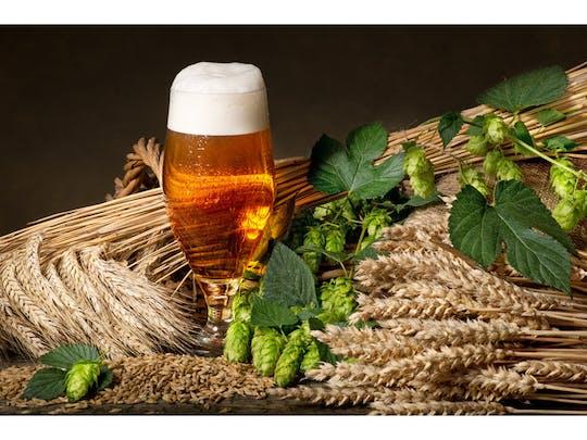Beer brewing course with hearty snack in Schwetzingen