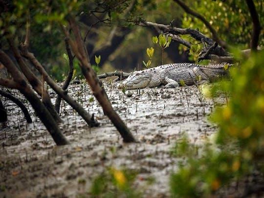 """Goa Tour """"Mangroven & Krokodile"""""""