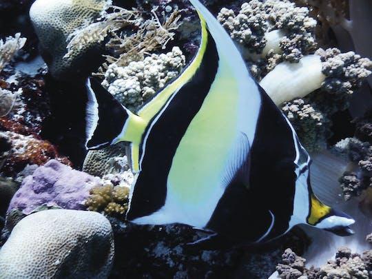 Wycieczka ze Snorkelingiem na Zanzibarze