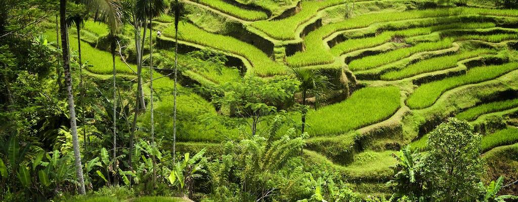 Einführung in Bali