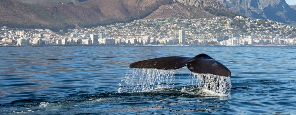Marine Eco Tour with transport from Cape Town