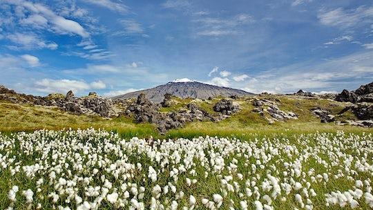Snæfellsnes National Park day tour