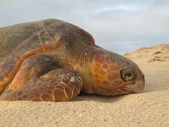Boa Vista Turtle Watching Tour