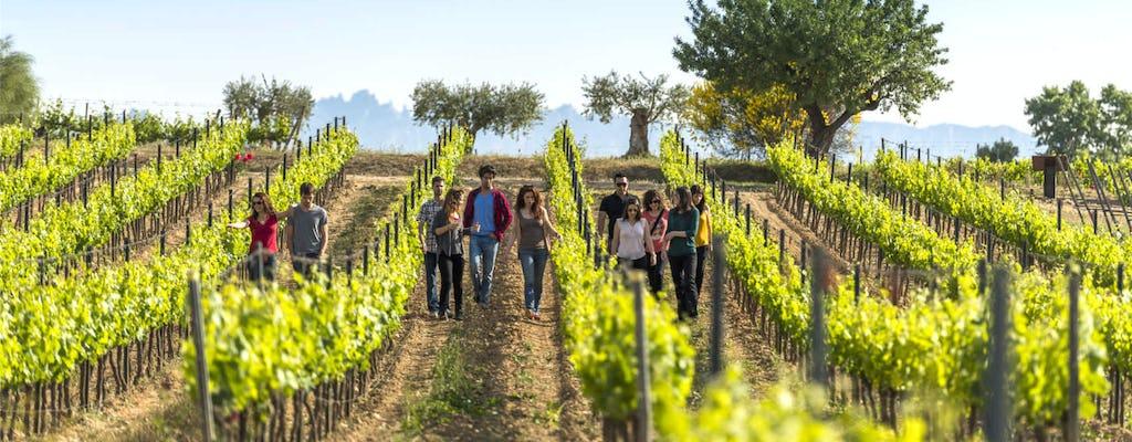 El Penedès hike and wines