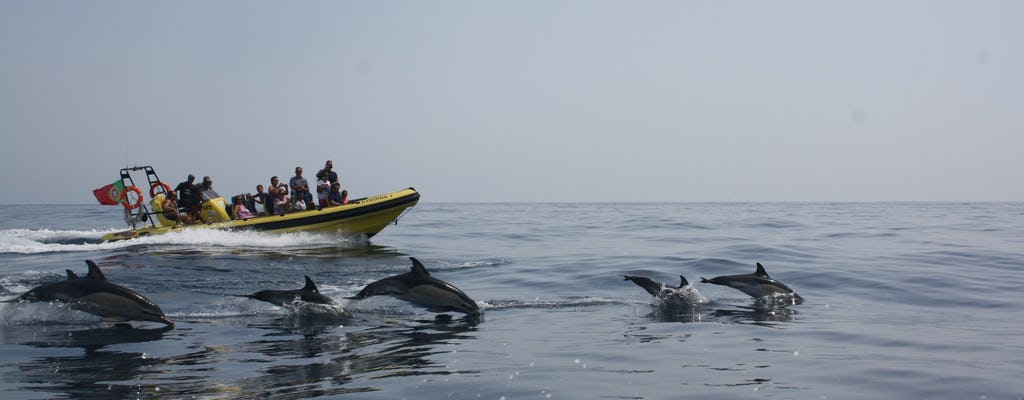 Crucero de avistamiento de delfines y cuevas a bordo del Insónia