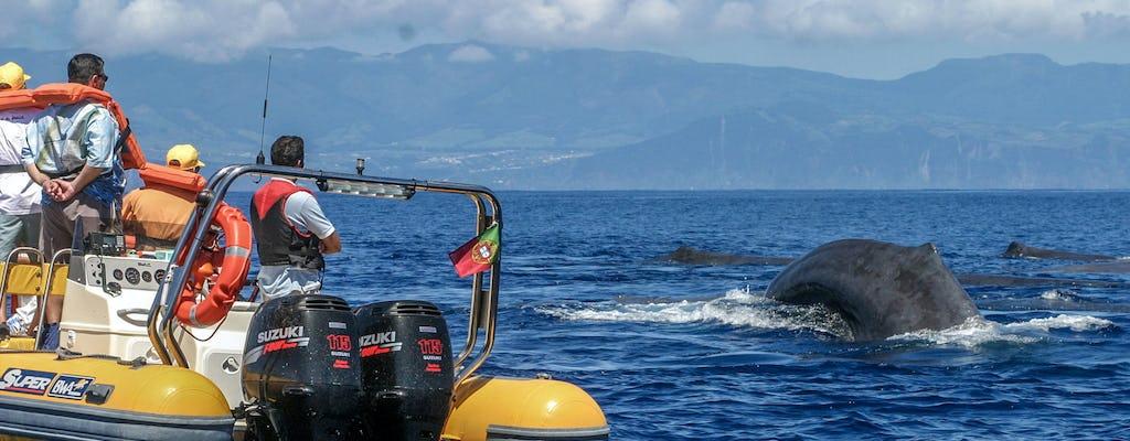 Avistamiento de ballenas en las Azores y paseo en barco por los islotes