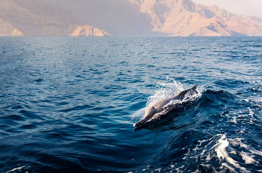 Gulf of Oman dolphin sightseeing tour
