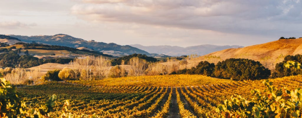 Luxury Napa Valley wine tasting tour from San Francisco