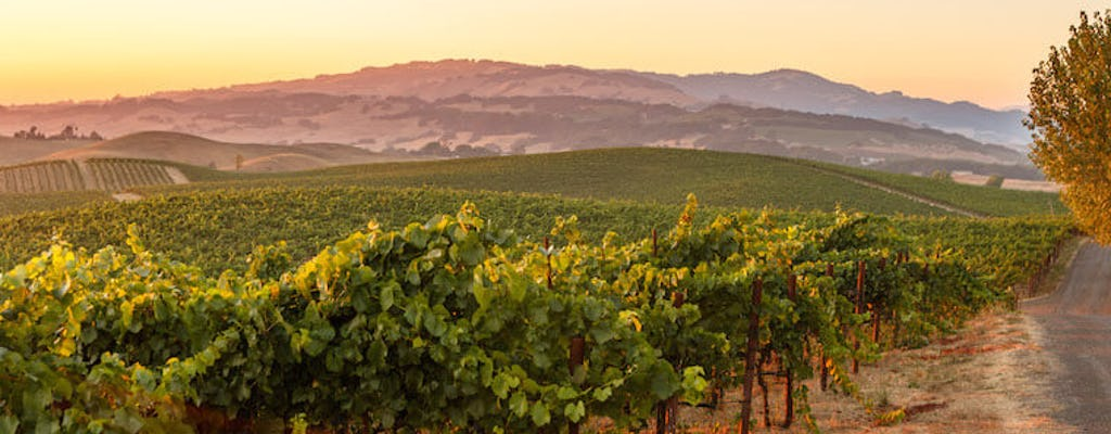 Half-Day Sonoma Wine Tour