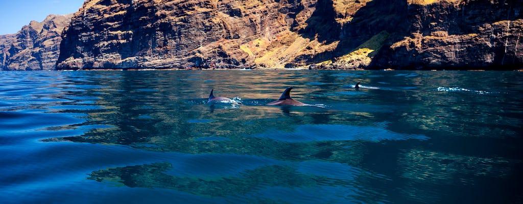 5 horas de avistamiento de ballenas y delfines en un eco-catamarán