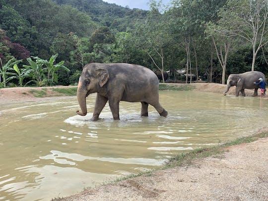Phuket: Begegnung mit den Elefanten