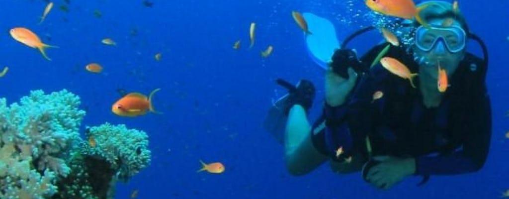 Viagem de um dia a Key West e aventura de snorkeling
