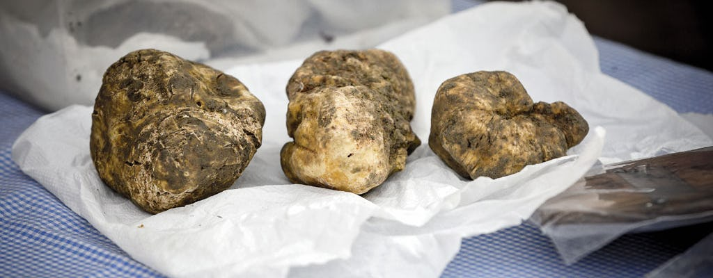 Langhe truffle hunting and wine tasting