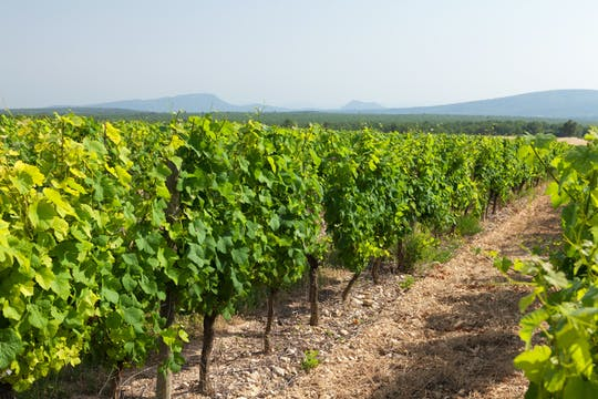 Visita e degustação na vinícola Marchesi de Cordano