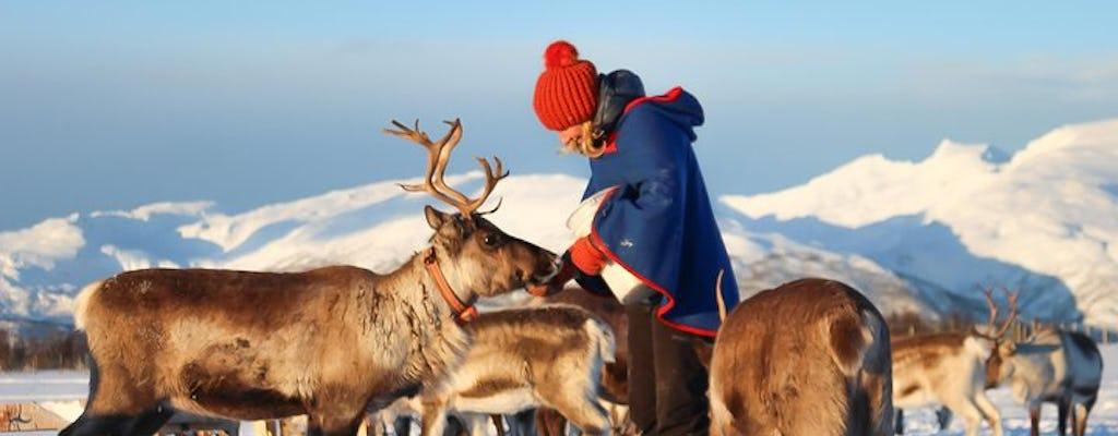 Découvrez la culture sami dans un camp de rennes