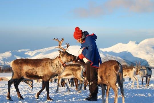 Scopri la cultura Sami in un campo di renne