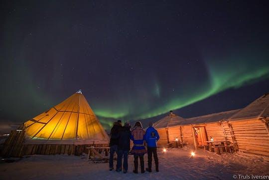 Cena in un campo di renne e aurora boreale