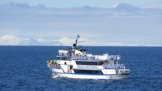 Avistamiento de ballenas en Reikiavik