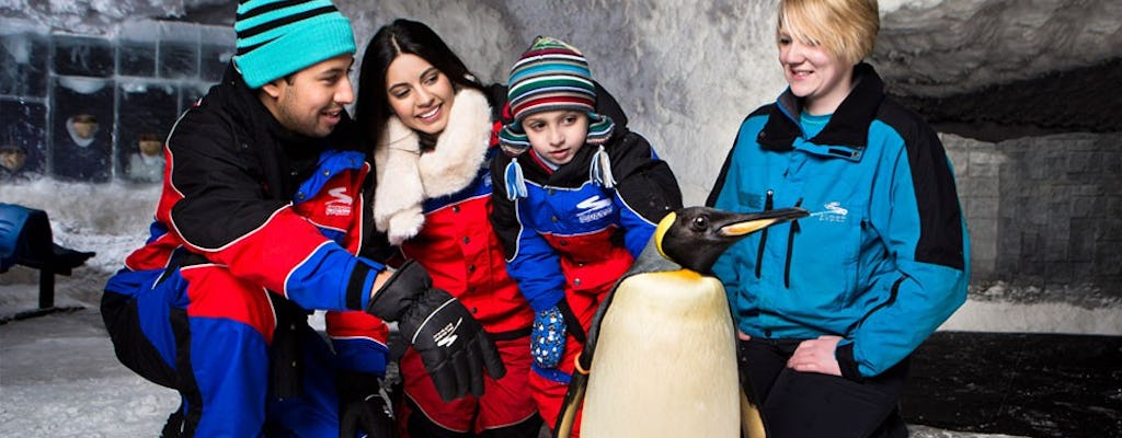 Penguin Encounter presso Ski Dubai