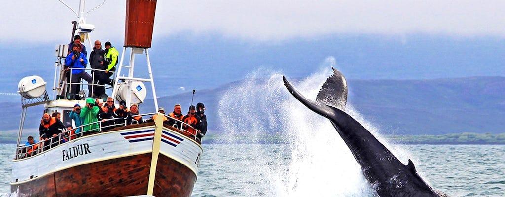 Walvissen spotten in de Skjálfandi-baai