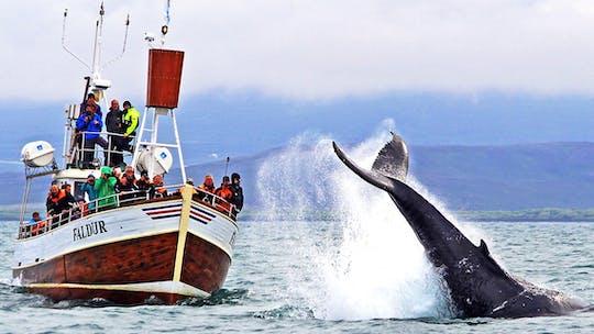 Obserwacja wielorybów w zatoce Skjálfandi