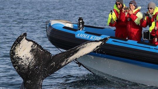 Húsavík Big Whale Safari i Puffin Island na łodzi RIB