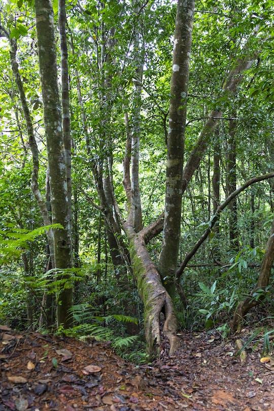 Sinharaja Forest Trek