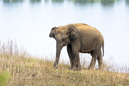 Udawalawe Elefanten Geländetour