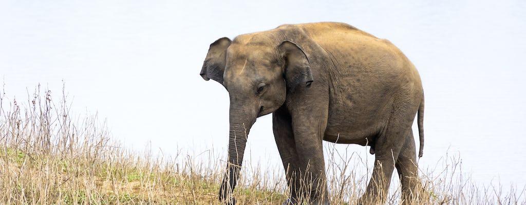 Udawalawe Elephant 4x4 Safari