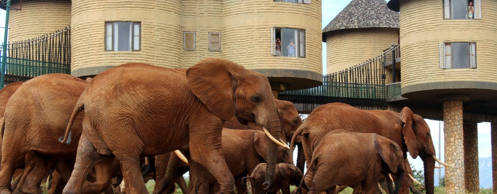 Safari de 3 jours à Tsavo East, Taita Hills et Salt Lick