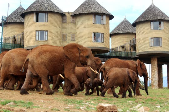 Tsavo East, Taita Hills and Salt Lick 3-day safari