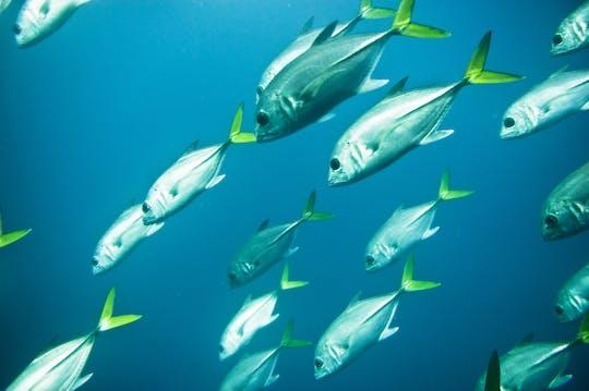 Red Sea Submarine Tour