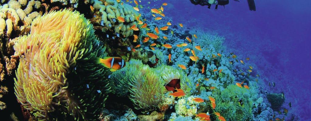 Découverte de la plongée sous-marine