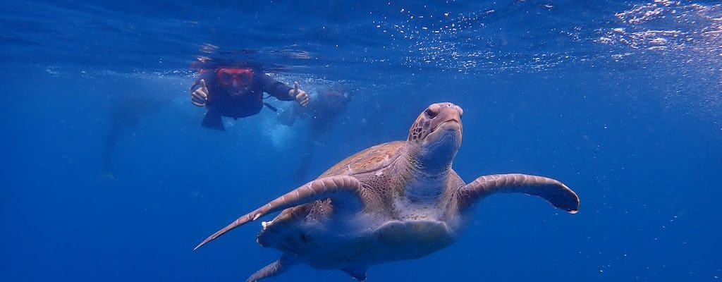 Escursione in kayak e snorkeling a Tenerife