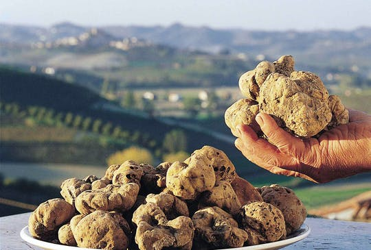White Truffle Fair Skip-the-Line Tickets and Guided Tour of Alba City Center