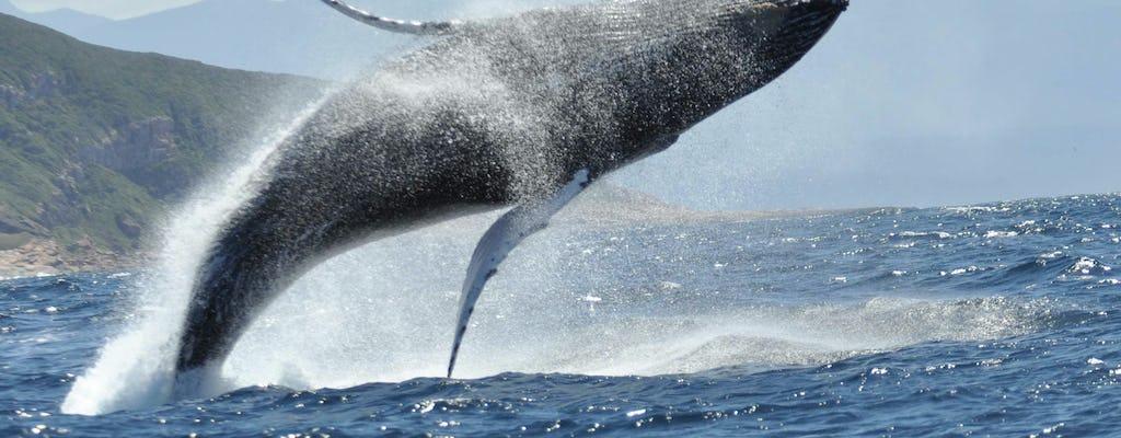 Круиз на лодке и наблюдение за китами