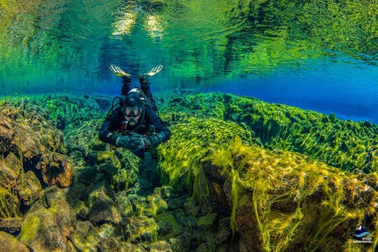 Dans le bleu de la plongée en apnée à Silfra