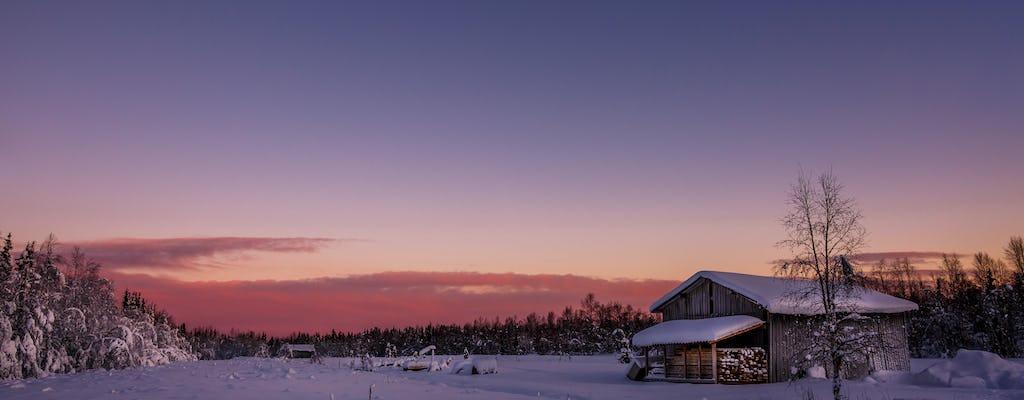 Rovaniemi Reindeer Sleigh Tour