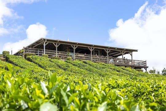 Wycieczka Z Maurytyjską Herbatą