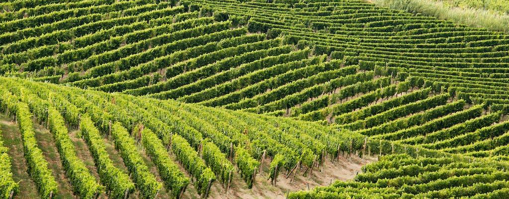 Wine tour of Monferrato