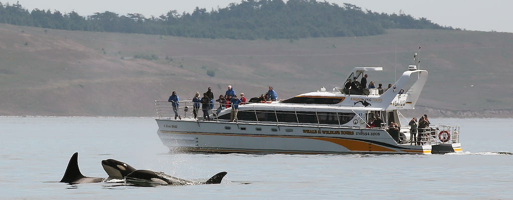 Luxury whale watching day tour