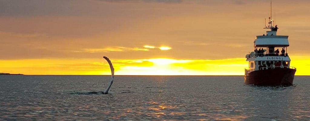 Observação de baleias sob o sol da meia-noite em Reykjavík