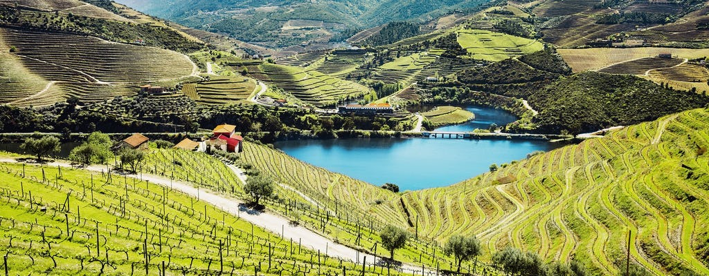 Douro Valley tour from Porto with two wineries and lunch