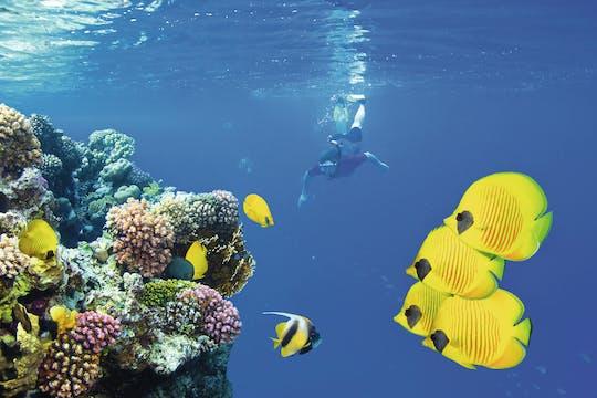 Mnemba Atoll Snorkelsafari