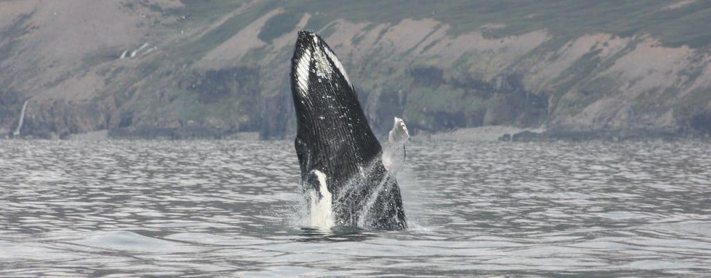 2-hour whale, Eyjafjord & Akureyri sightseeing tour