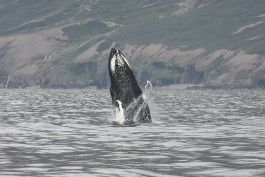 Tour panoramico di 2 ore di balene, Eyjafjord e Akureyri