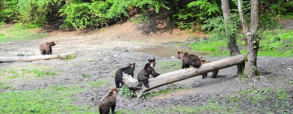 Experiencia de observación de osos cerca de Brasov