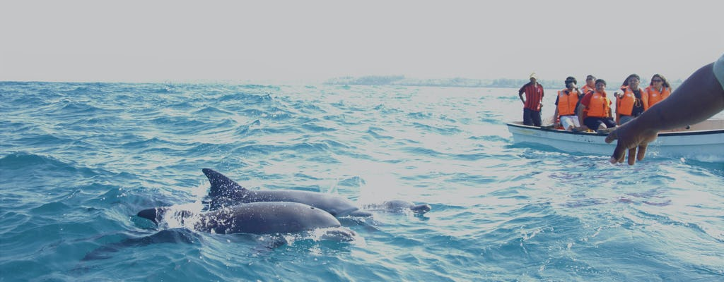 Key West tour with dolphin watching