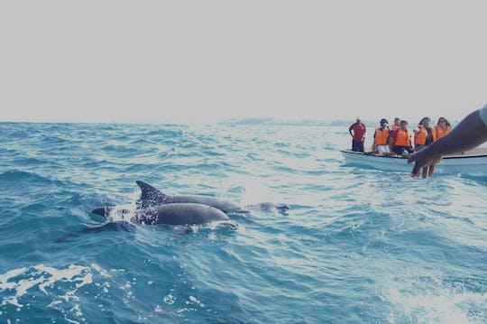 Excursão a Key West com observação de golfinhos